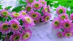 Smile gift & flower